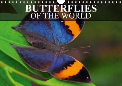 Butterflies of the World 2017