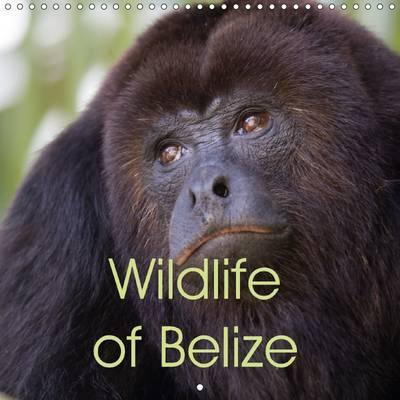 Wildlife of Belize 2017 : Gorgeous Wildlife Photos from the Central American Paradise of Belize