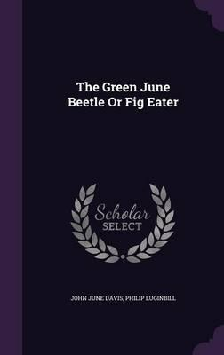 The Green June Beetle or Fig Eater