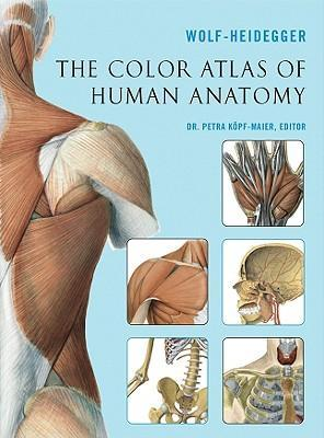 Human colour anatomy atlas pdf