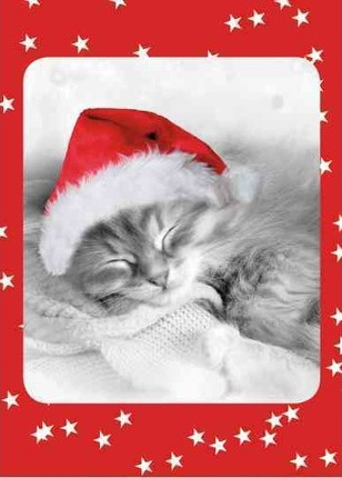 Fuzzy Christmas Kitten Boxed Holiday Cards