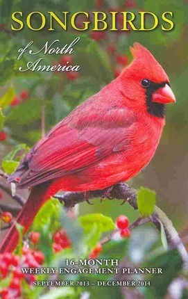 Songbirds of North America 16-Month Weekly Engagement Planner