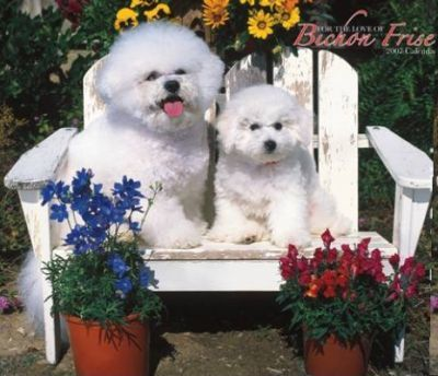 For the Love of Bichon Frise 2007 Deluxe Calendar