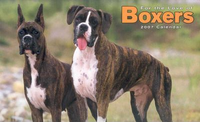 For the Love of Boxers 2007 Deluxe Calendar
