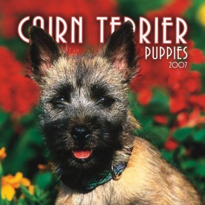 Cairn Terrier Puppies 2007 Mini Calendar
