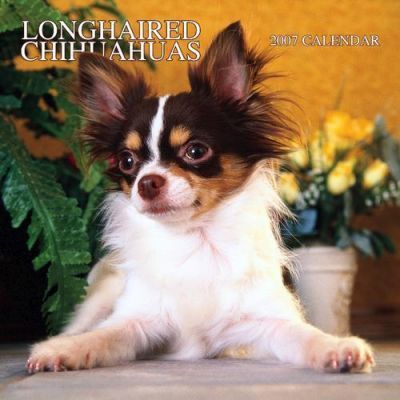 Longhaired Chihuahuas 2007 Calendar
