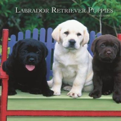 Labrador Retriever Puppies 2007 Calendar
