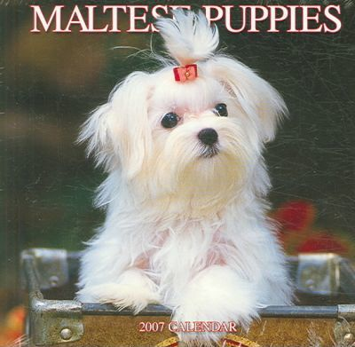 Maltese Puppies 2007 Calendar
