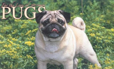 For the Love of Pugs 2007 Calendar