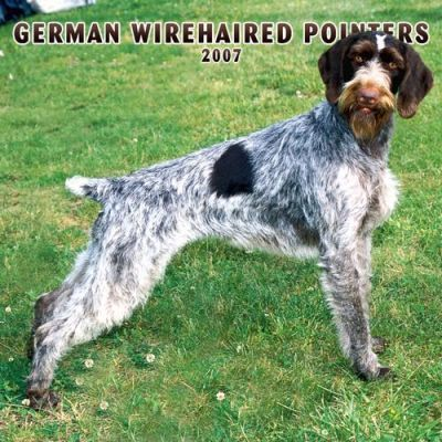 German Wirehaired Pointers 2007 Calendar