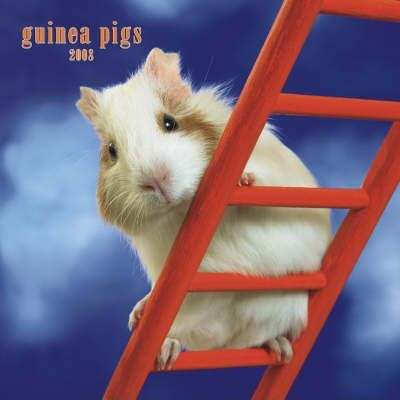 Guinea Pigs 2008 Square Wall