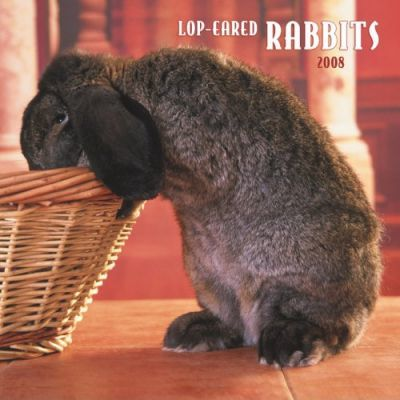 Lop-Eared Rabbits 2008 Square Wall