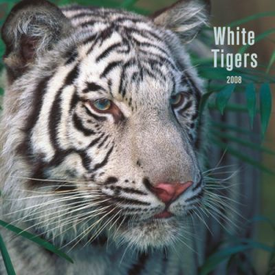 White Tigers 2008 Square Wall 2008