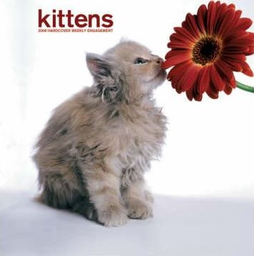 Kittens 2008 Hardcover Weekly Engagement