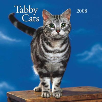 Tabby Cats 2008 Square Wall