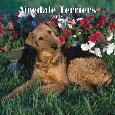 Airedale Terriers 2008 Square Wall