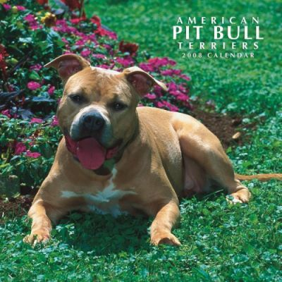 American Pit Bull Terriers 2008 Square Wall