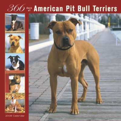 American Pit Bull Terriers 366 Days 2008 Square Wall
