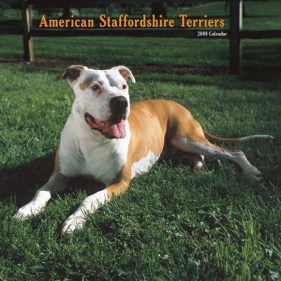 American Staffordshire Terriers 2008 Square Wall