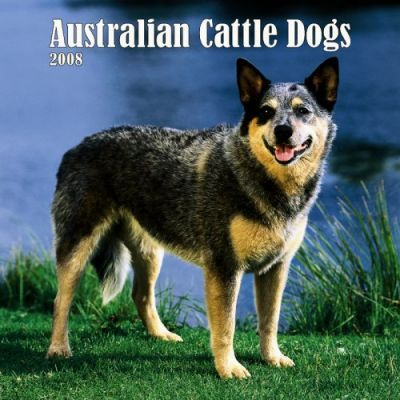Australian Cattle Dogs 2008 Square Wall