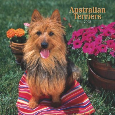Australian Terriers 2008 Square Wall