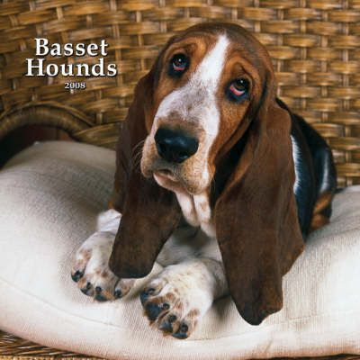Basset Hounds 2008 Square Wall