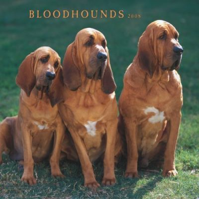 Bloodhounds 2008 Square Wall