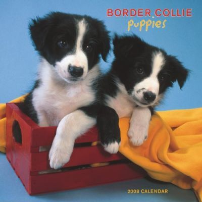 Border Collie Puppies 2008 Square Wall