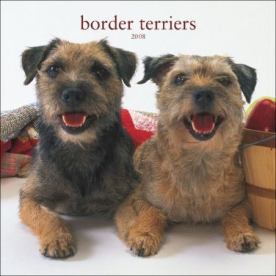Border Terriers 2008 Square Wall