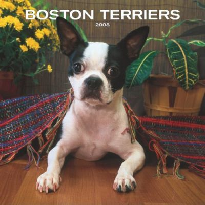 Boston Terriers 2008 Square Wall