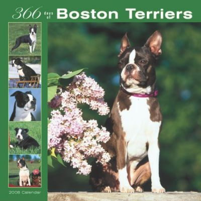 Boston Terriers 366 Days 2008 Square Wall
