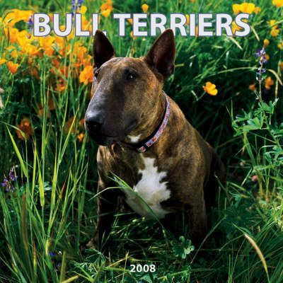 Bull Terriers 2008 Square Wall