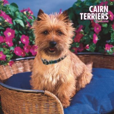Cairn Terriers 2008 Square Wall