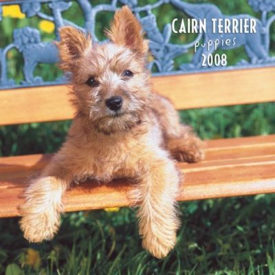 Cairn Terrier Puppies 2008 Mini Wall