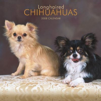 Chihuahuas, Longhaired 2008 Square Wall