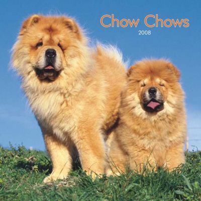 Chow Chows 2008 Square Wall