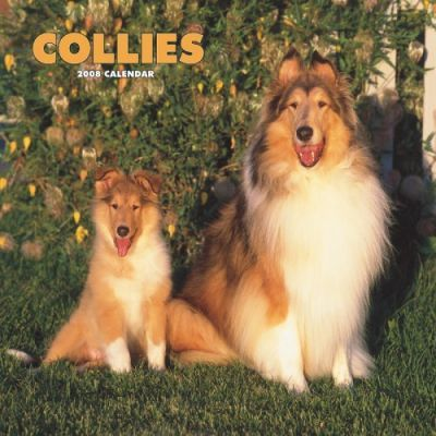 Collies 2008 Square Wall