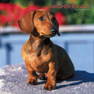 Dachshunds 2008 Square Wall