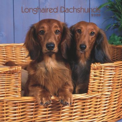Dachshunds, Longhaired 2008 Square Wall