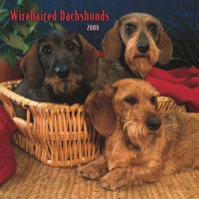 Dachshunds, Wirehaired 2008 Square Wall