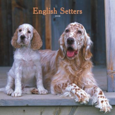 English Setters 2008 Square Wall