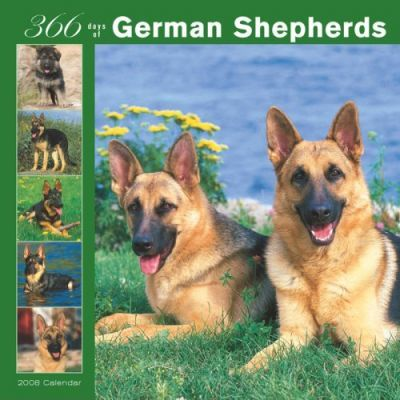 German Shepherds 366 Days 2008 Square Wall