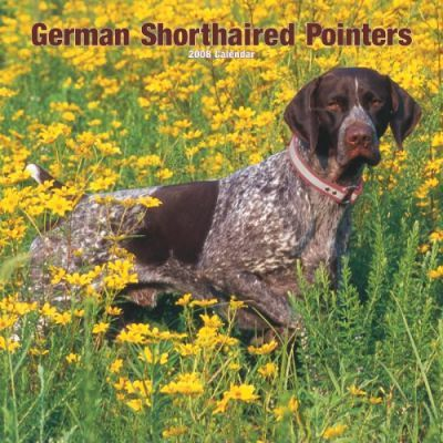 German Shorthaired Pointers 2008 Square Wall
