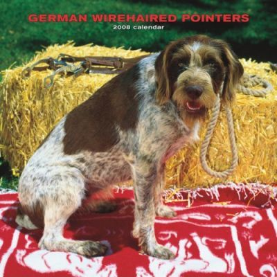 German Wirehaired Pointers 2008 Square Wall