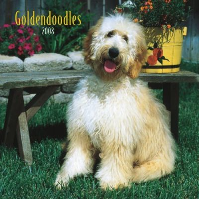 Goldendoodles 2008 Square Wall
