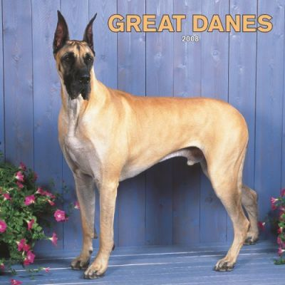 Great Danes 2008 Square Wall