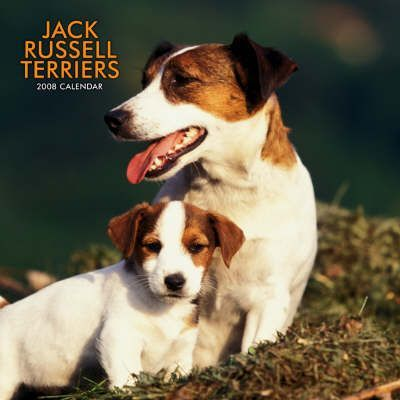 Jack Russell Terriers 2008 Square Wall