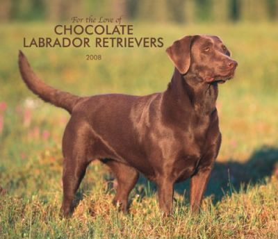 Labrador Retrievers, Chocolate for the Love of 2008 Deluxe Wall