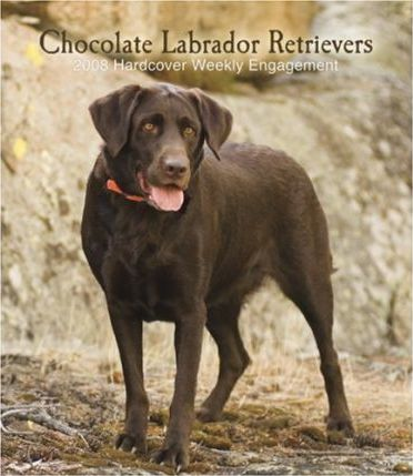Labrador Retrievers, Chocolate 2008 Hardcover Weekly Engagement