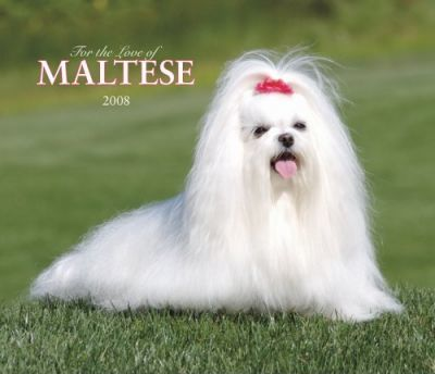 Maltese, for the Love of 2008 Deluxe Wall